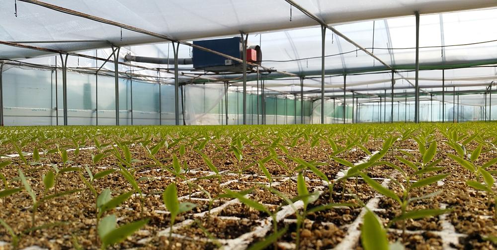 semilleros-instalaciones